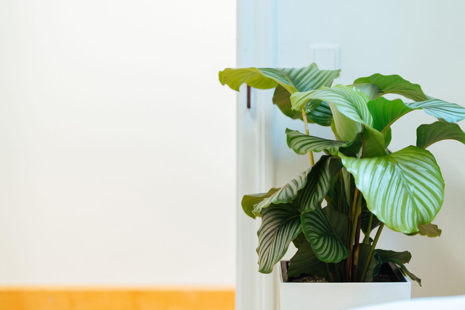 Detaillaufnahme einer Zimmerpflanze in der Physiotherapie physioconcept Nürnberg
