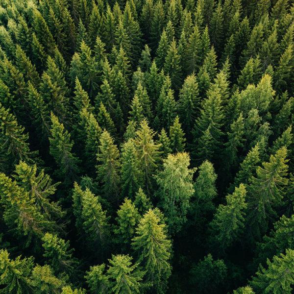 Dichter Wald mit Bäumen von oben fotografiert